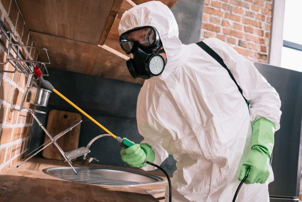 pest control worker spraying pesticides on metal shelves in kitchen
